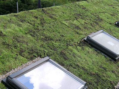зелен покрив