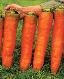 big-vegetables2